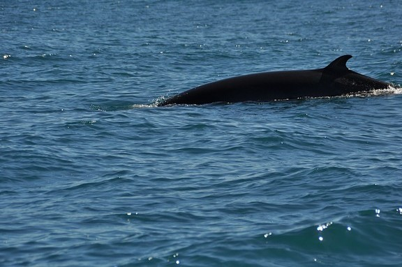 Whale Watching Spots Near Topanga Canyon Inn, Los Angeles, Topanga Canyon Inn