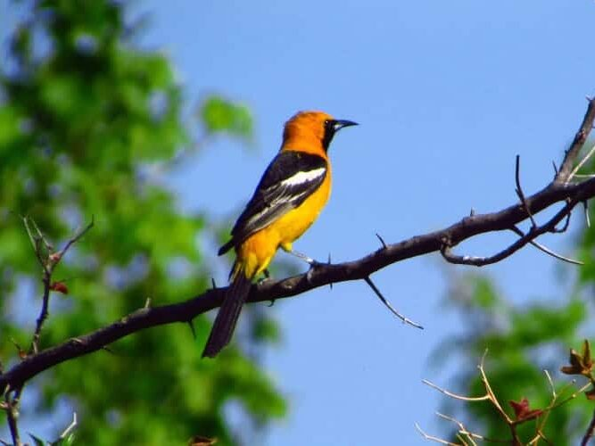 2 Best Birdwatching Locations near Los Angeles and The Place to Stay, Topanga Canyon Inn