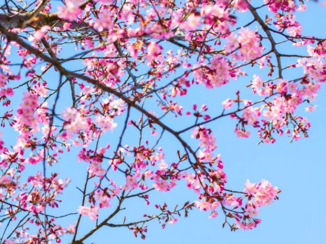 5 Reasons You Should Visit Topanga Canyon in the Spring, Topanga Canyon Inn